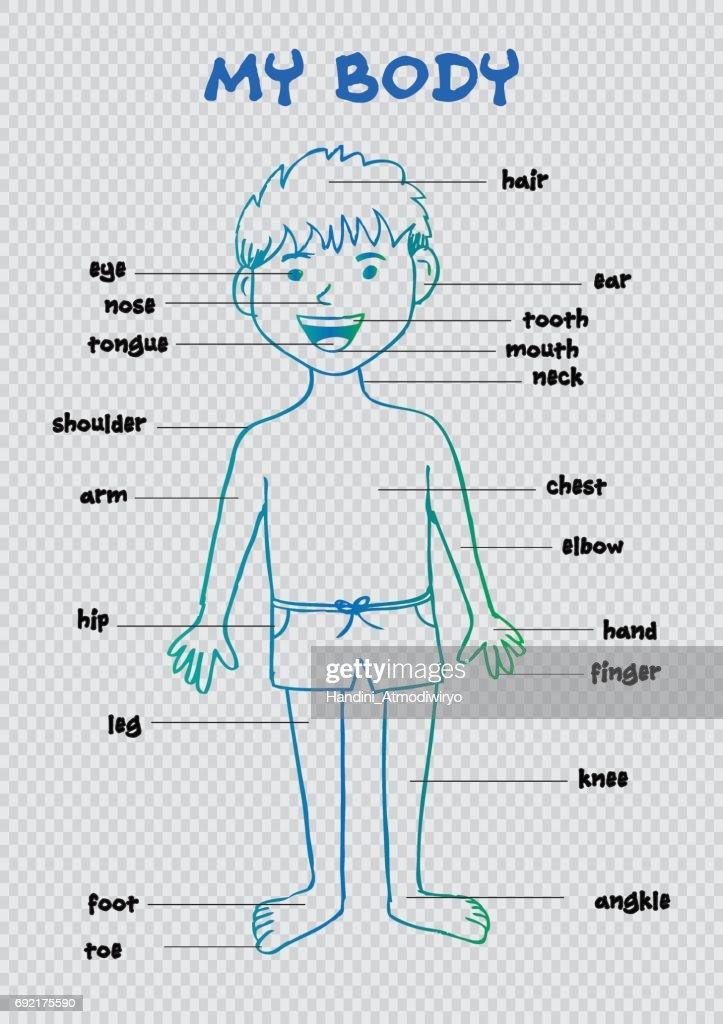 Mein Körper Kinder Bildungsinfografik Für Zeigt Teile Des ...