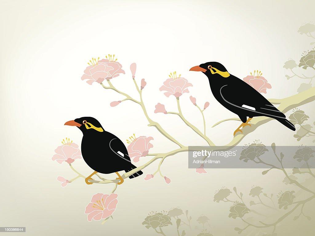 Myna birds