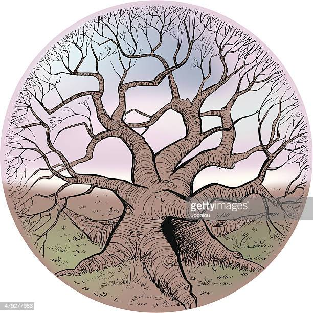 Mystic Rounded Tree