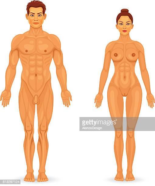 illustrazioni stock, clip art, cartoni animati e icone di tendenza di uomo nudo e donna di vista frontale - donna nuda