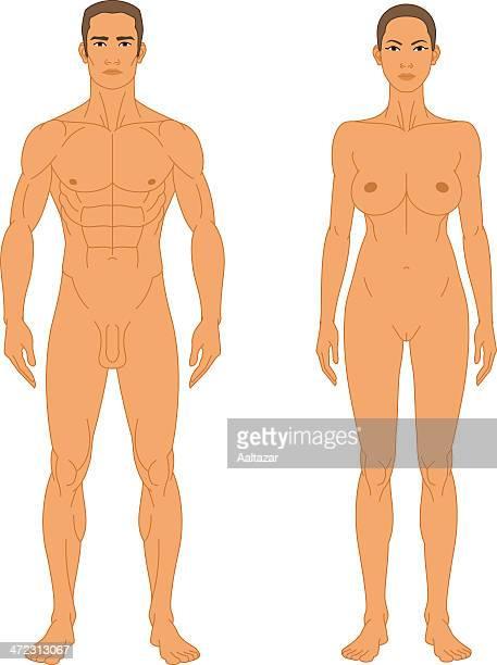 illustrazioni stock, clip art, cartoni animati e icone di tendenza di nudo uomo e donna-vista anteriore - donna nuda