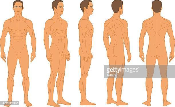 ilustraciones, imágenes clip art, dibujos animados e iconos de stock de hombre desnudo longitudinal mediana de rotación axé - penis