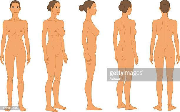illustrazioni stock, clip art, cartoni animati e icone di tendenza di nudo di donna-longitudinale mediana ascia rotazione - donna nuda