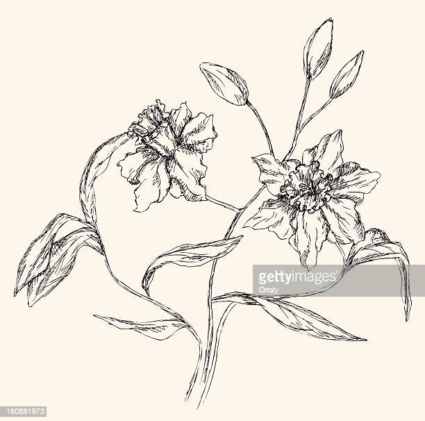 narcissus - daffodil stock illustrations, clip art, cartoons, & icons