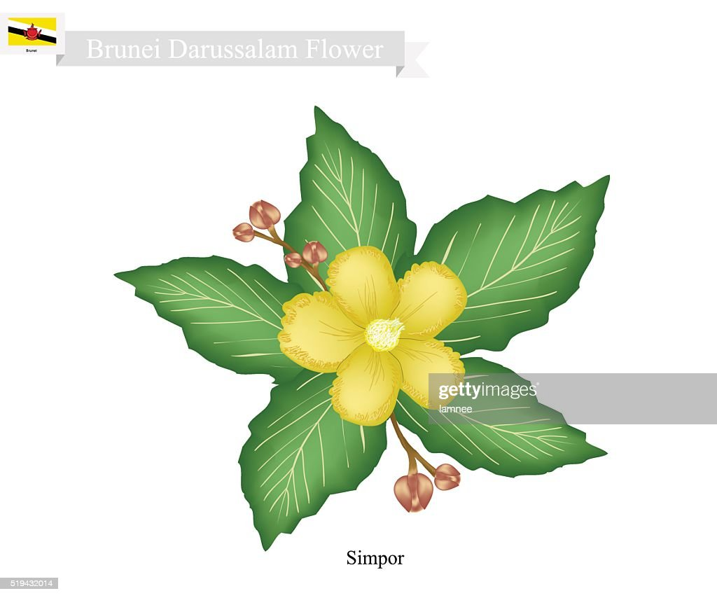 National Flower of Brunei Darussalam, Simpor Flowers