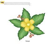 National Flower of Brunei Darussalam, Simpor Flowers