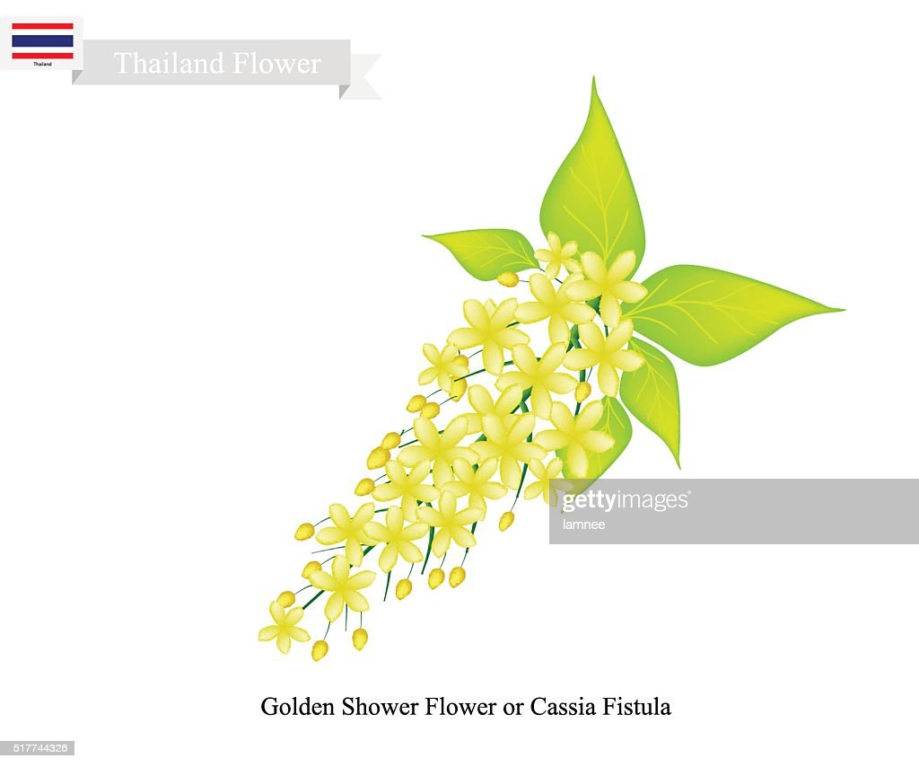 National Flower of Thailand, Golden Shower Flower