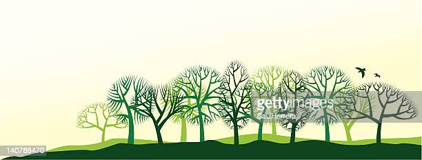natural landscape with trees - deciduous tree stock illustrations, clip art, cartoons, & icons