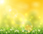 Nature and sun over grass