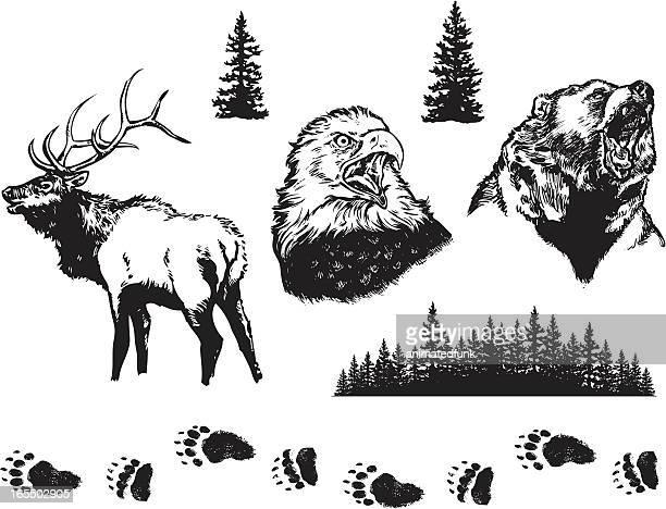 nature design elements - elk stock illustrations