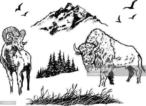 nature elements - prairie stock illustrations, clip art, cartoons, & icons