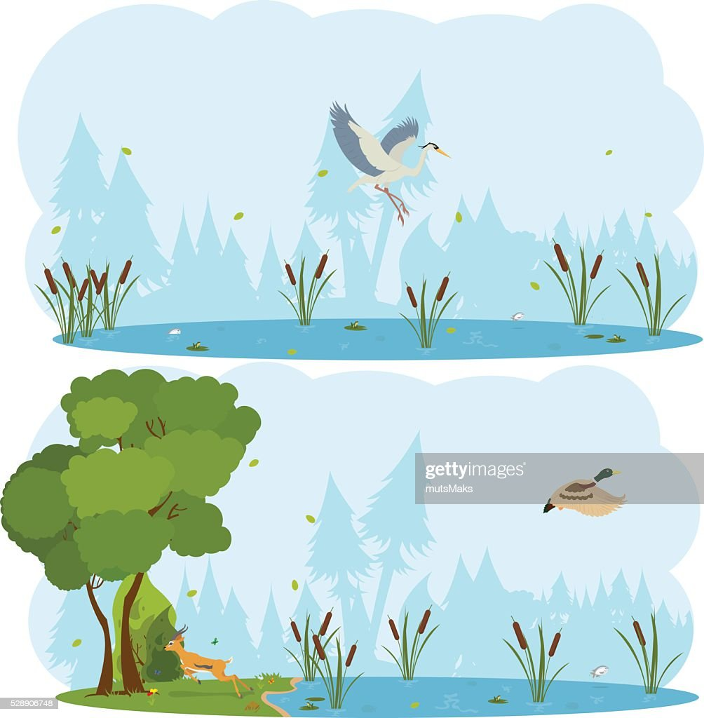 nature scenes. Scene lakes and swamps with living birds