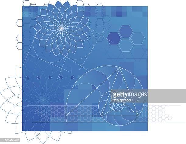 nature's geometry - nautilus stock illustrations