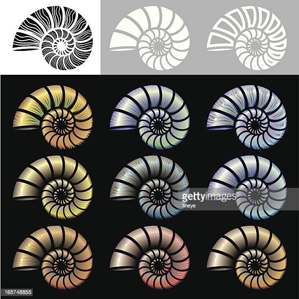 nautilus shells icon set - nautilus stock illustrations