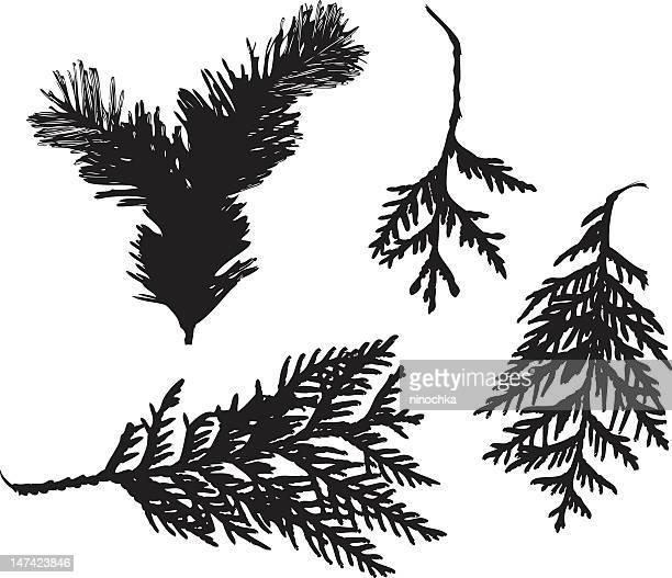 ニードルズの枝 - ユーカリの木点のイラスト素材/クリップアート素材/マンガ素材/アイコン素材