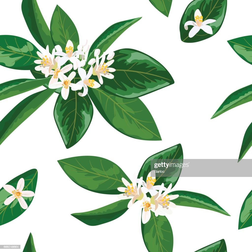 Neroli theme. fleur d'orange, Seamless pattern vector flowers and leaves
