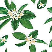 Neroli theme. fleur d'orange, Seamless pattern vector flowers and leaves