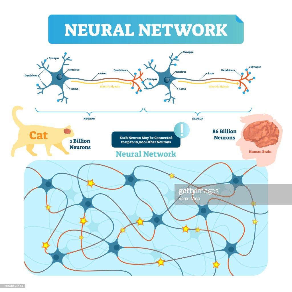 Neural network vector illustration. Neuron structure and net diagram.