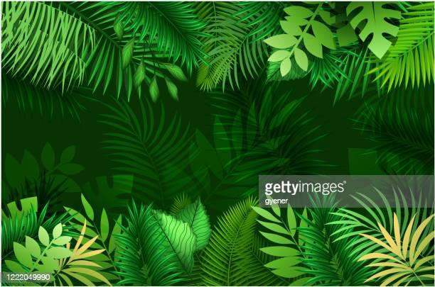 stockillustraties, clipart, cartoons en iconen met nieuwe tropische vakantie banner - tropische boom