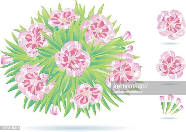 nice flowerplant (carnation) - carnation flower stock illustrations, clip art, cartoons, & icons
