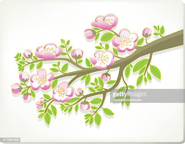 Nice Treetwig with pink Flowers.