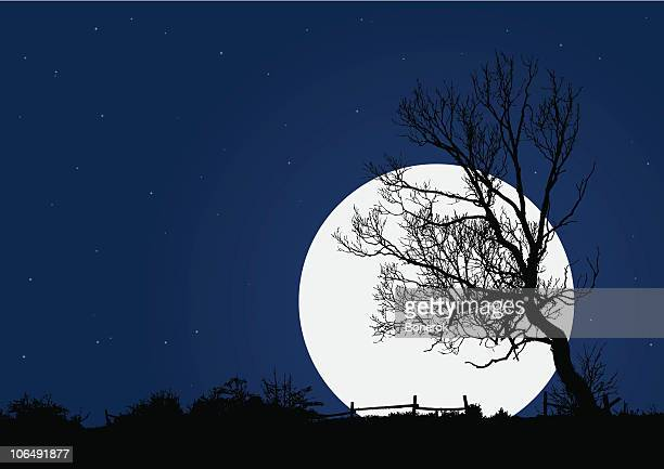 night landscape - plant attribute stock illustrations, clip art, cartoons, & icons