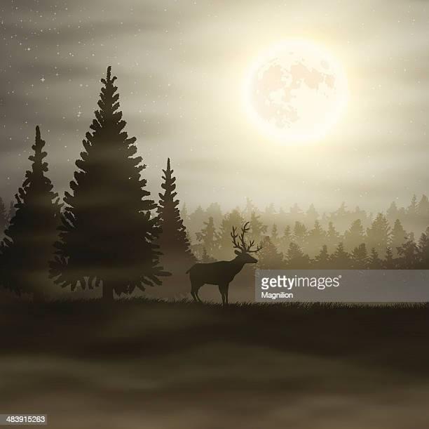 illustrations, cliparts, dessins animés et icônes de paysage de nuit - être à l'ombre