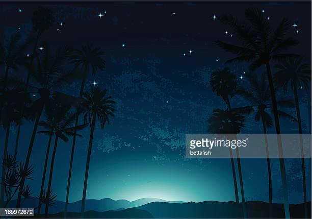 Nacht palms