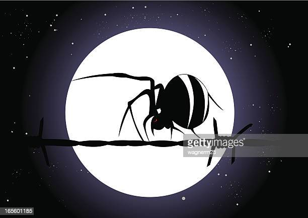 night spider ii - phobia stock illustrations, clip art, cartoons, & icons