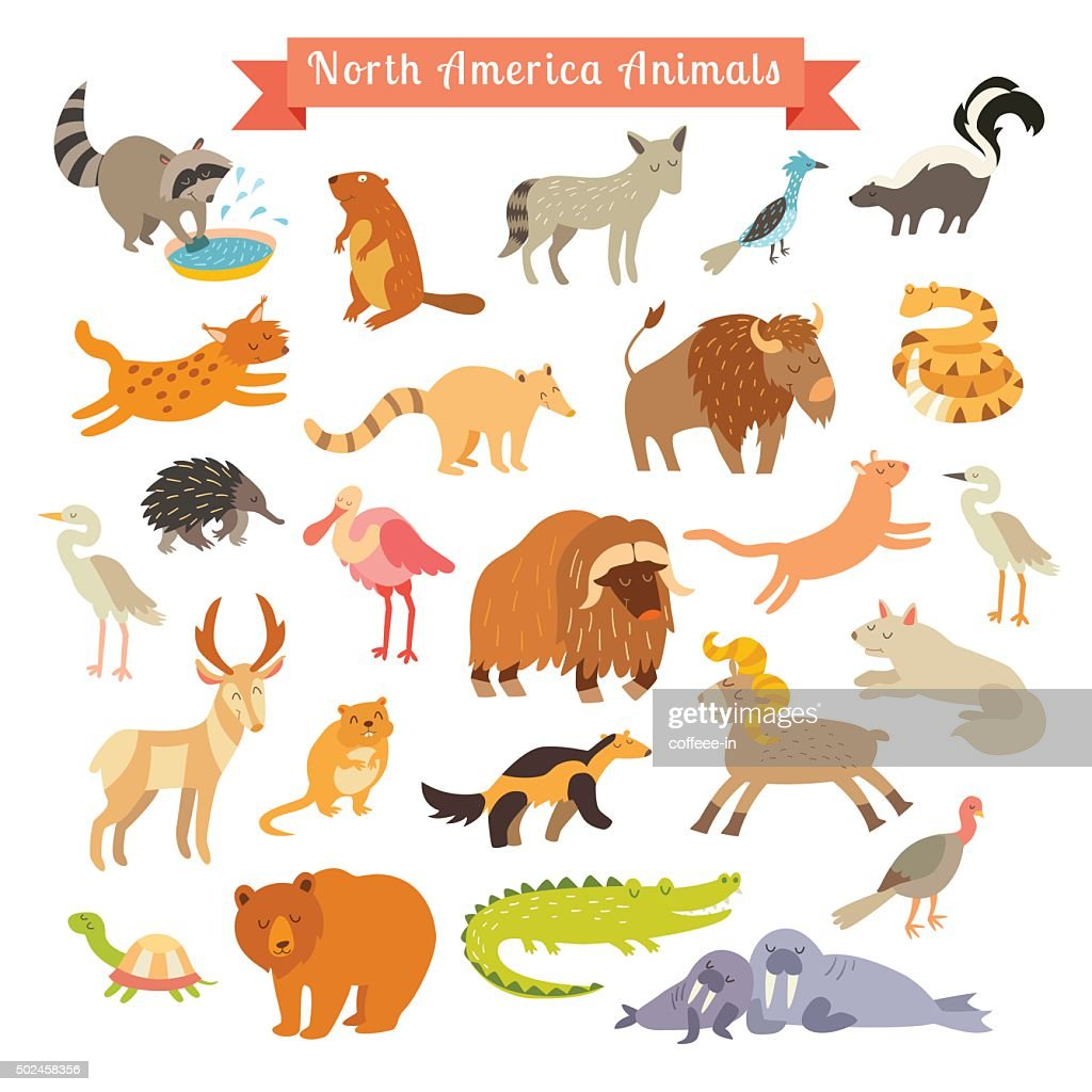 North America animals  vector illustration. Big vector set