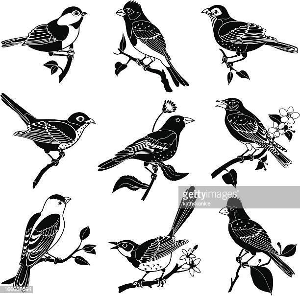 north american birds - songbird stock illustrations
