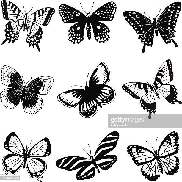 ilustrações, clipart, desenhos animados e ícones de north american borboletas - lepidóptero