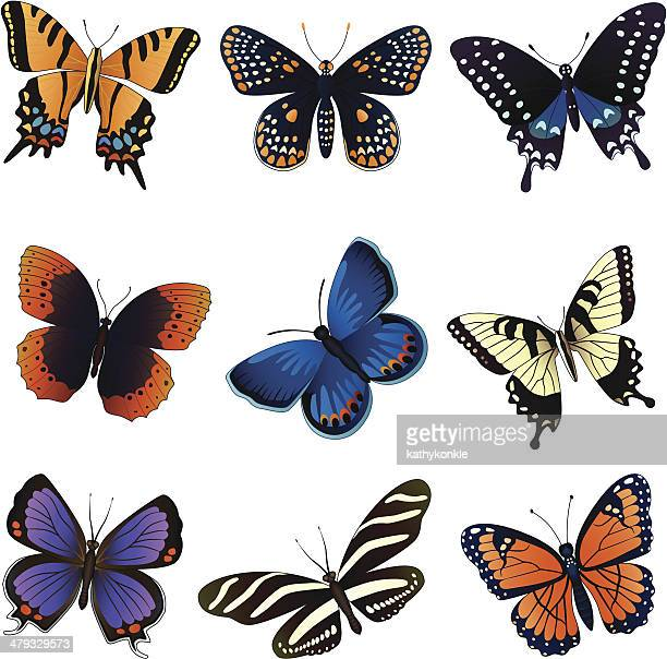 north american butterflies - swallowtail butterfly stock illustrations