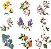 North American flowering plants