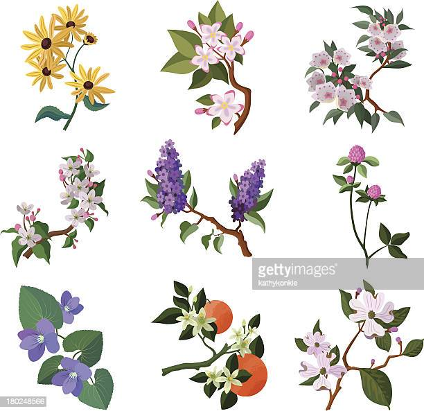 north american flowering plants - flowering trees stock illustrations, clip art, cartoons, & icons