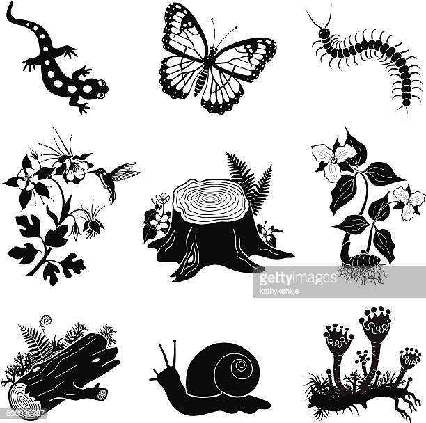 North American forest icon set in black and white