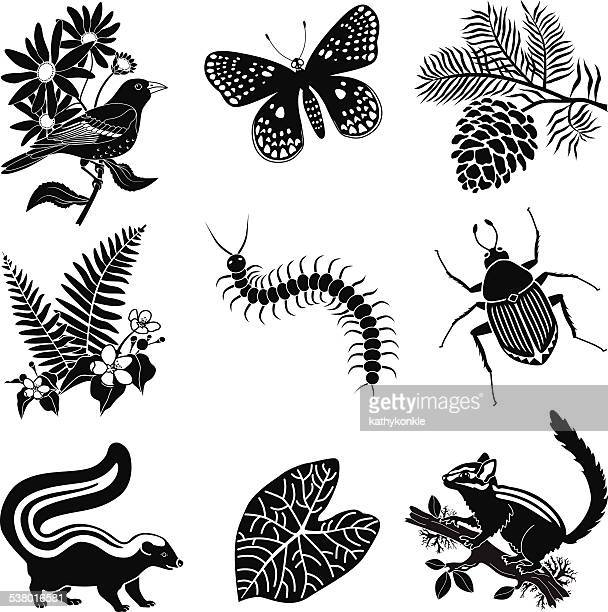 north american forest wildlife icon set in black and white - chipmunk stock illustrations