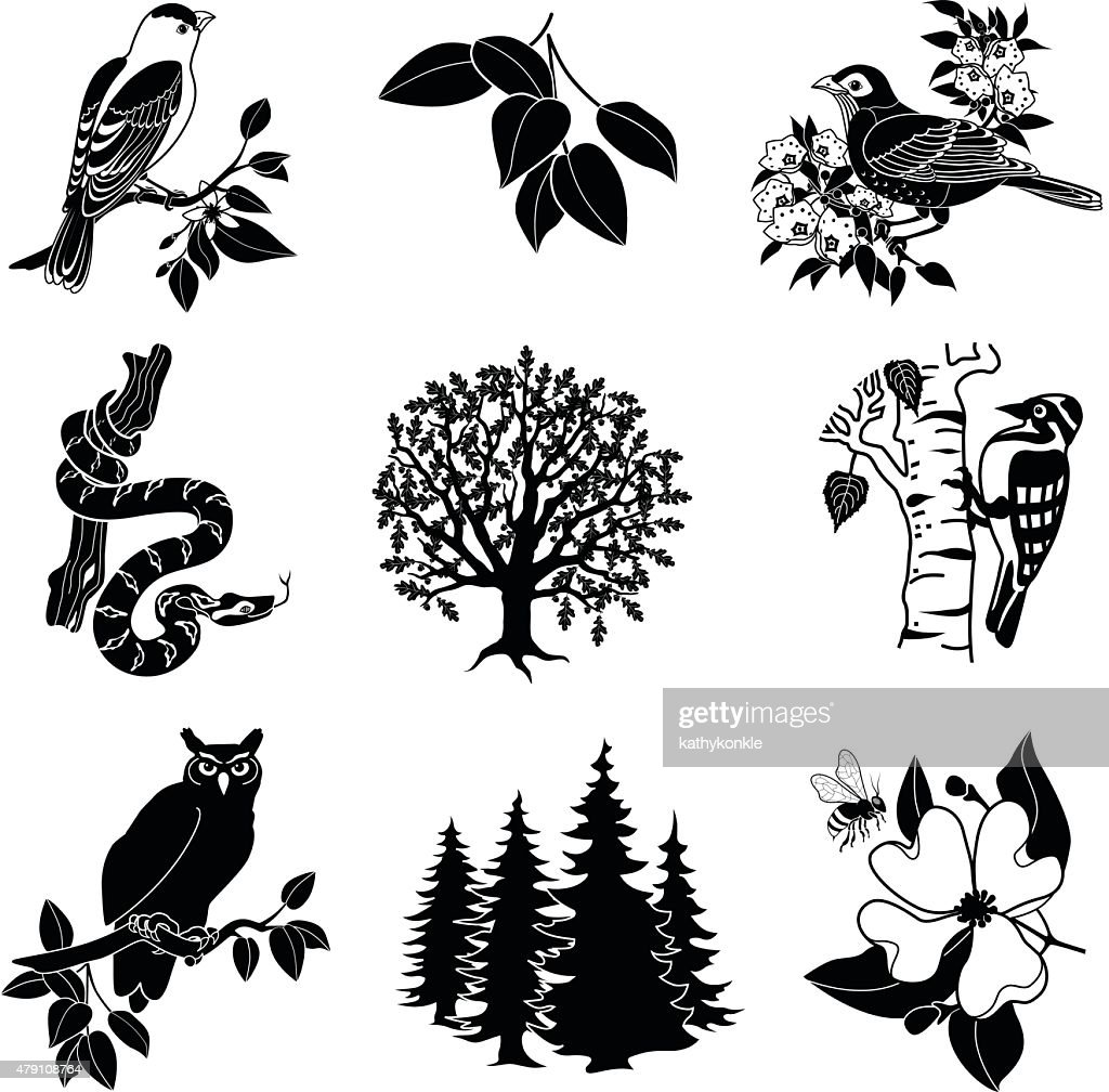 North American wildlife and plants in black and white