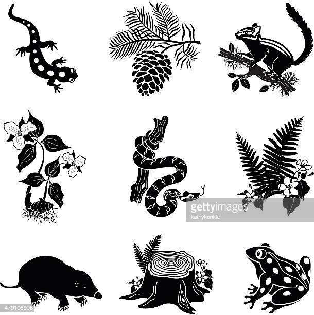 ilustrações, clipart, desenhos animados e ícones de north american vida selvagem e plantas em preto e branco - réptil