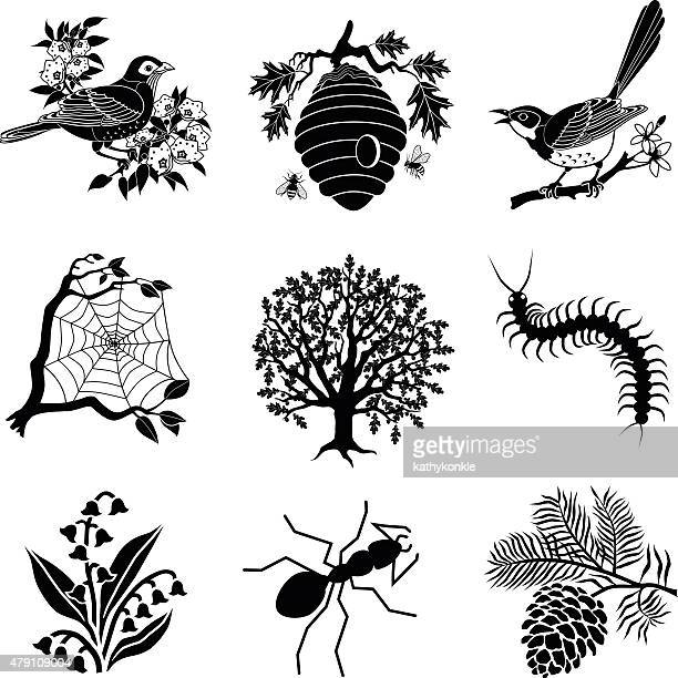 north american wildlife and plants in black and white - mockingbird stock illustrations, clip art, cartoons, & icons