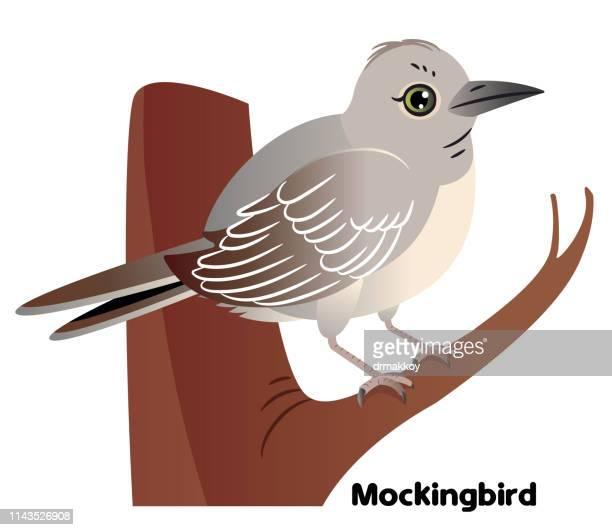 northern mockingbird - songbird stock illustrations