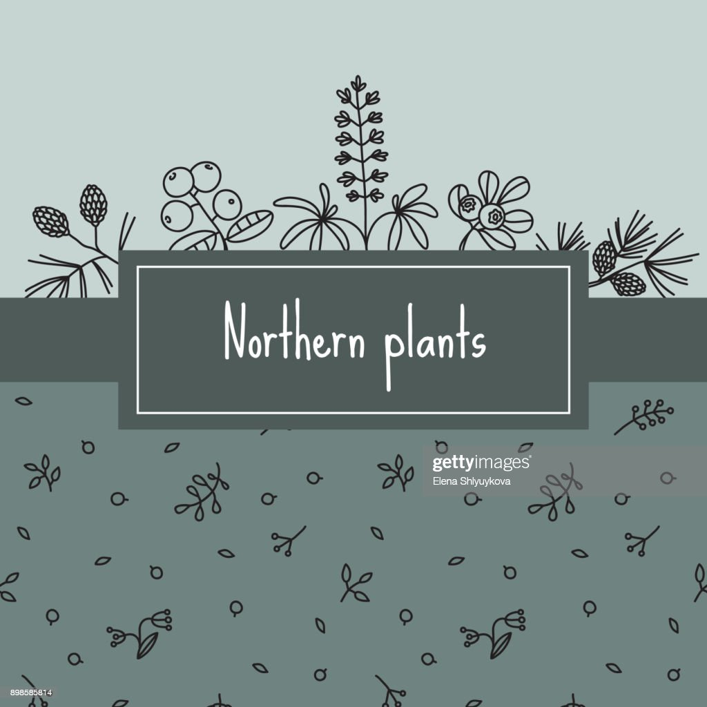 Northern plants, banner with items like lupines, spruce
