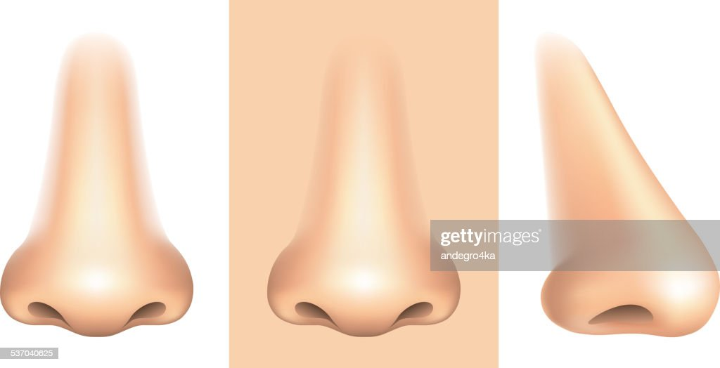 Nose isolated on white vector