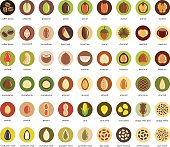 Nuts and seeds vector icon set