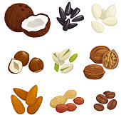 Nuts, grain and kernels vector icons