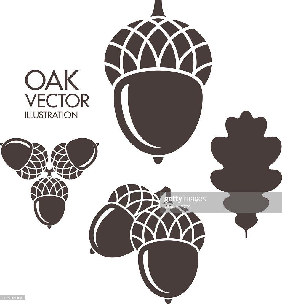 Oak. Acorn. Leaf