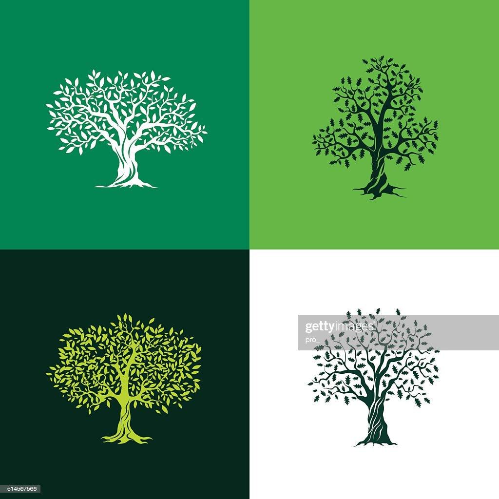 oak and olive trees