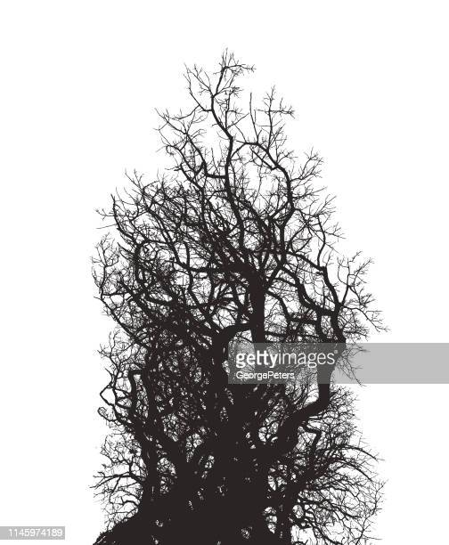 oak tree and branches - tangled stock illustrations
