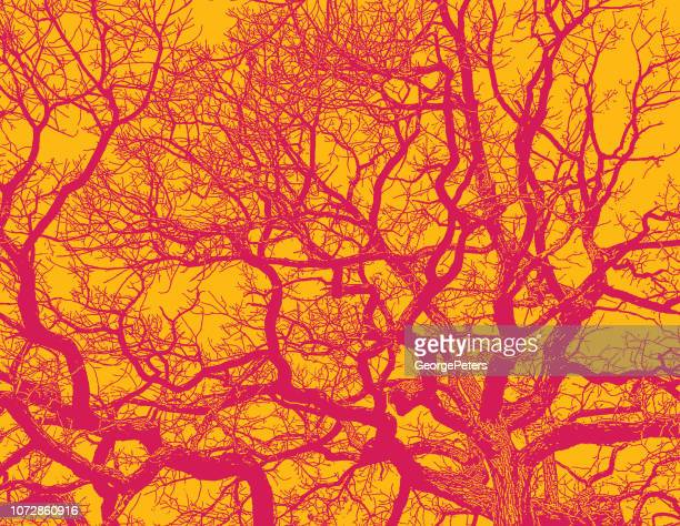 Oak Tree and branches with vibrant colors