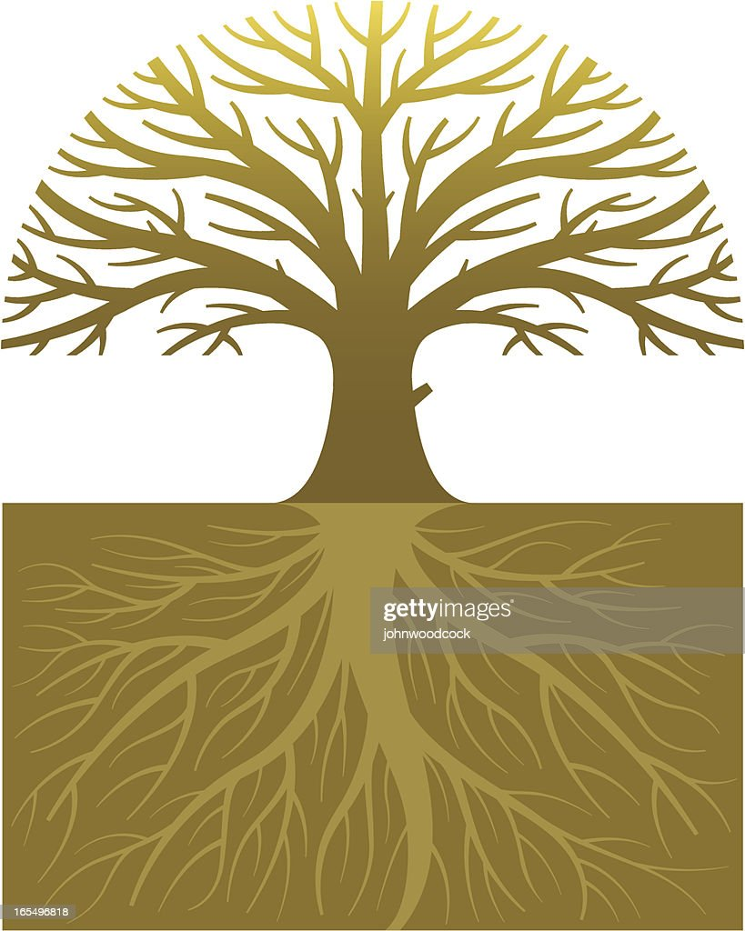 Oak tree and roots : stock illustration
